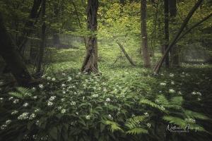 Le-jardin-des-ours_3389