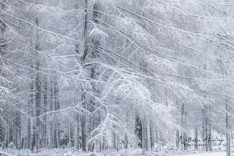 forêt neige