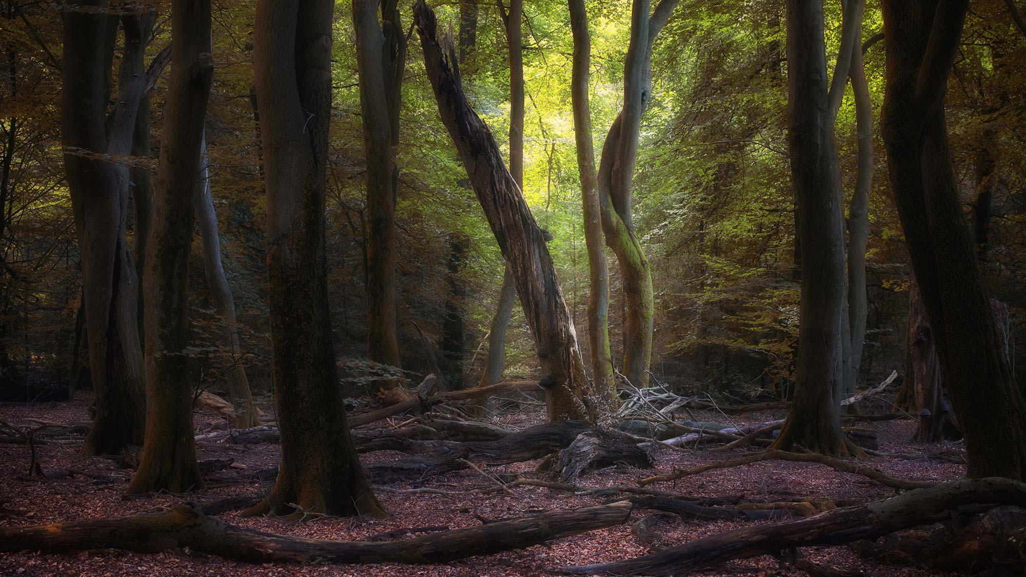 Forest Nathalie Annoye 2